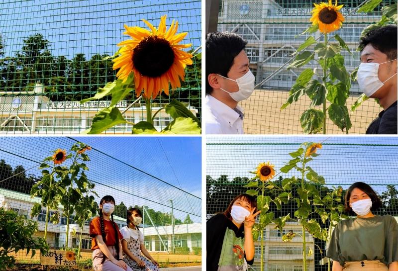 敬愛大学八日市場高等学校向日葵絆プロジェクト